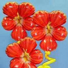 Гибискусы в цвету